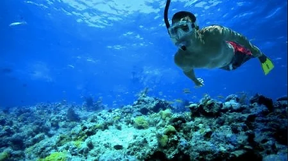 buceo isla del coral.webp