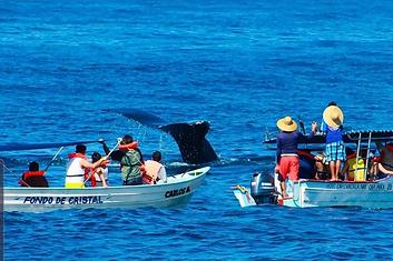 Tour de ballenas en guayabitos