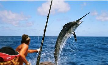 pesca deportiva en guayabitos