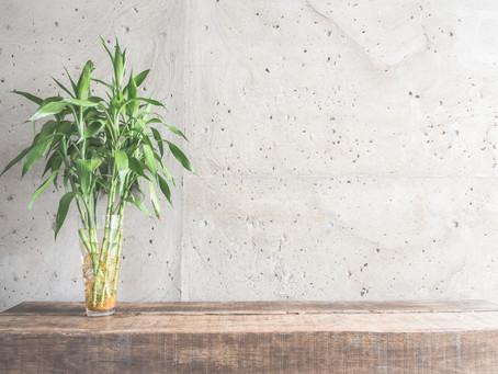 Saiba a importância de cultivar plantas nos ambientes