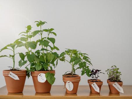 7 Hierbas saludables para cultivar y condimentar tus recetas