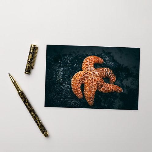 Starfish Standard Postcard