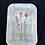 Thumbnail: Small Indian Paintbrush 03