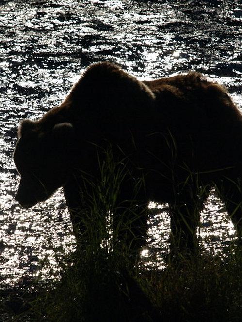 Bear Sihlouette