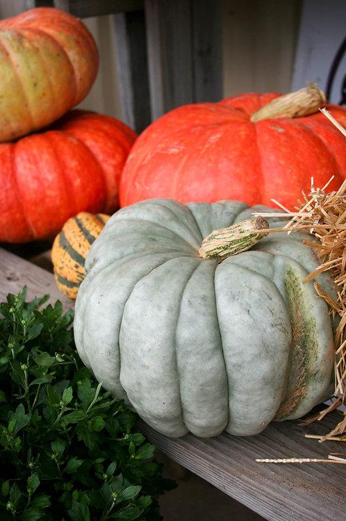 Medium Heirloom Pumpkins