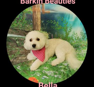 Beautiful Bella