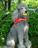 Dog-ology:  Poodle