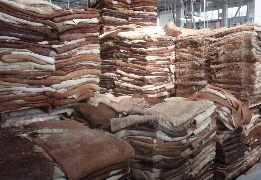 Cattle Hides, Cattle Skins
