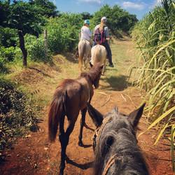horseback riding to Zapote