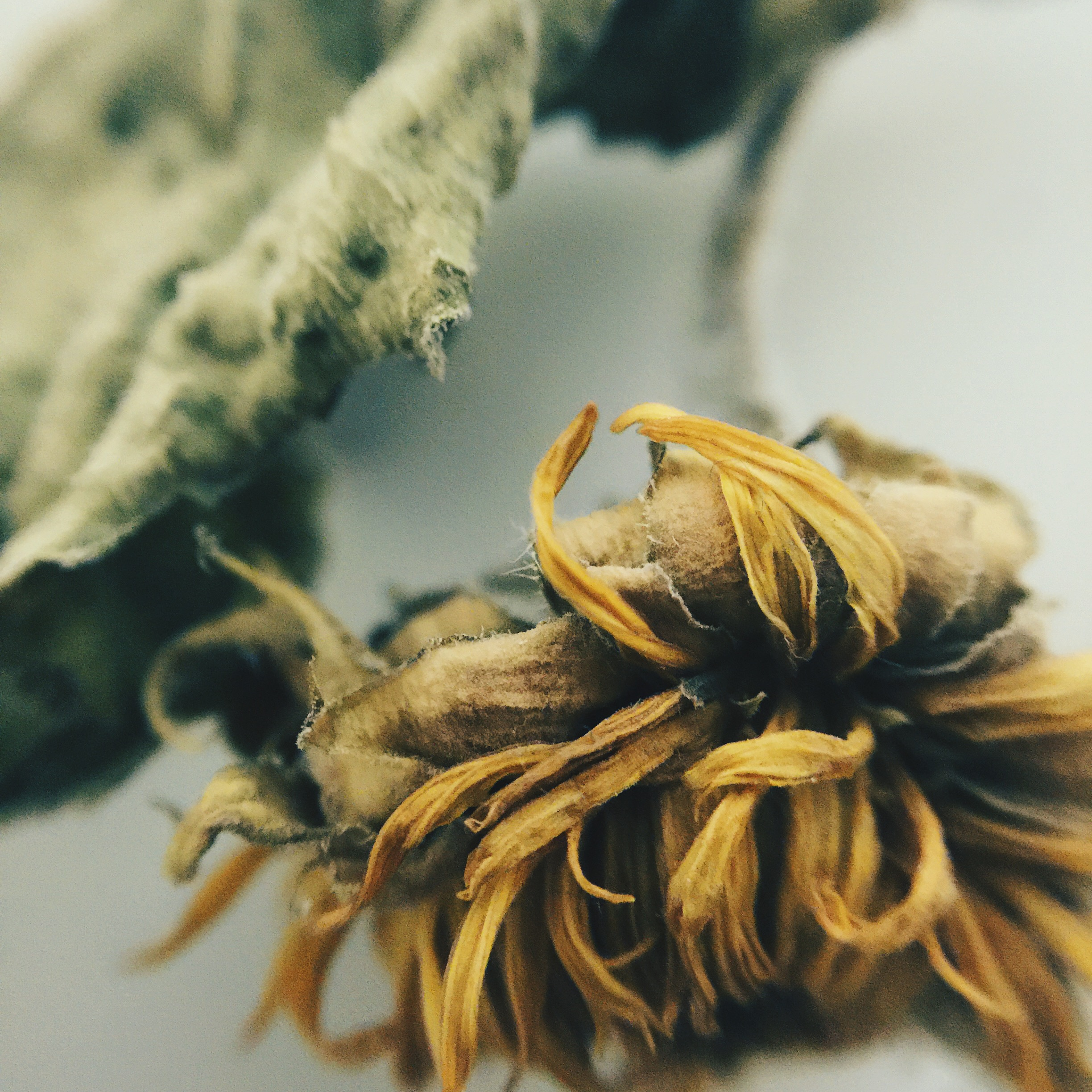 dried flower 2
