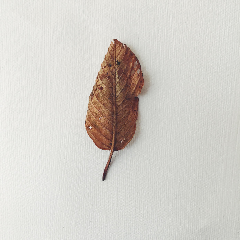 fallen leaves (detail)