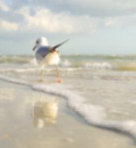 beach-bird-clouds-808267.jpg