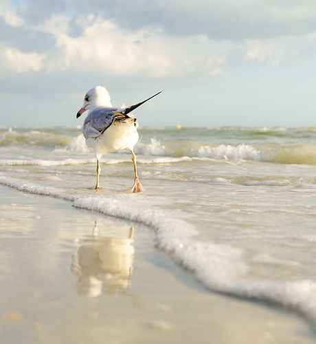 beach-bird-clouds-808267.jpg