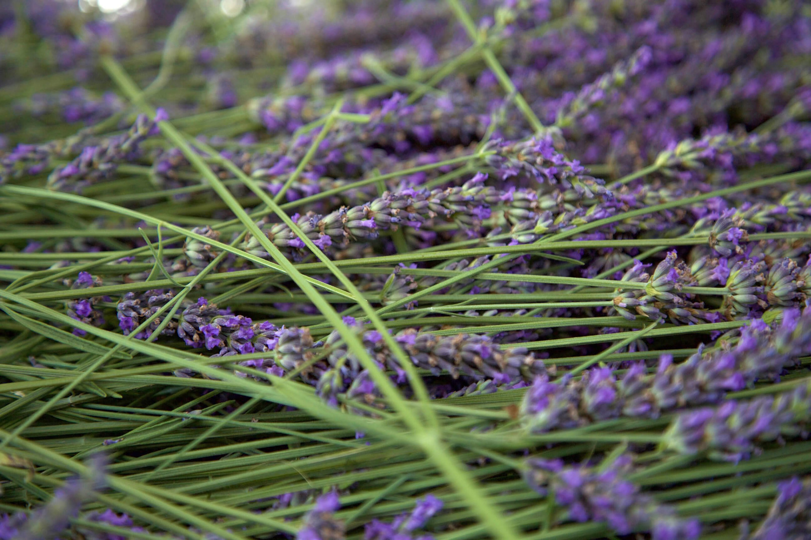 10 Ways to Add Lavender to Your Skin and Hair Care