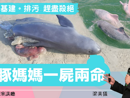 波波教授演講廳:為哭泣中的海豚打逆境戰