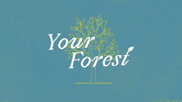 Your Forest Series