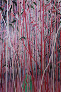 The Pink Woods