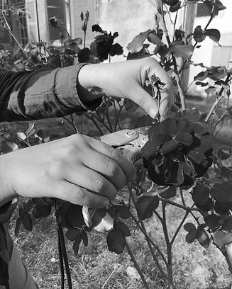 jardin_rose_edited.jpg