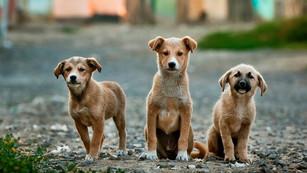 Επιχορηγήθηκε η κατασκευή καταφυγίου αδεσπότων ζώων συντροφιάς, ύψους 372.000 €, από το ΦιλόΔημος ΙΙ
