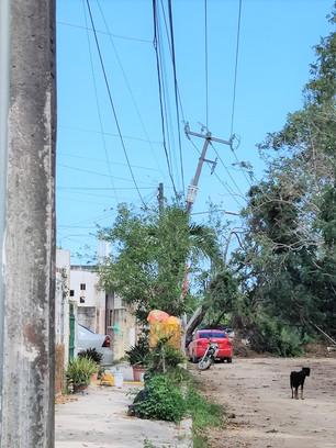 """Vecinos de Villas Cancún lanzan """"SOS"""" a las autoridades; 20 días con árboles caídos y postes a punto"""
