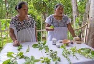 Turistas interesados en la medicina tradicional maya