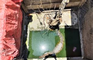 Alarma de vecinos por cocodrilo en un domicilio de Avante II