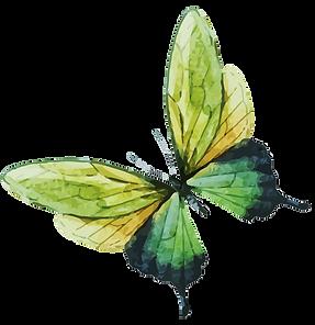 Aquarel Butterfly 7