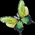 Aquarell-Schmetterling 7