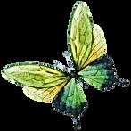 Aquarelle Papillon 7