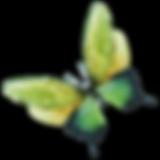 Watercolor Butterfly 7