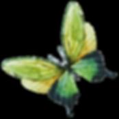 Acuarela de la mariposa 7