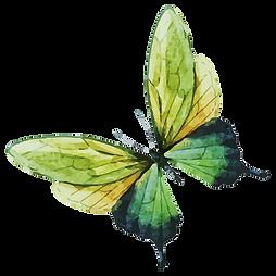 Akvarel motýl 7