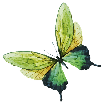 Watercolor Butterfly 7