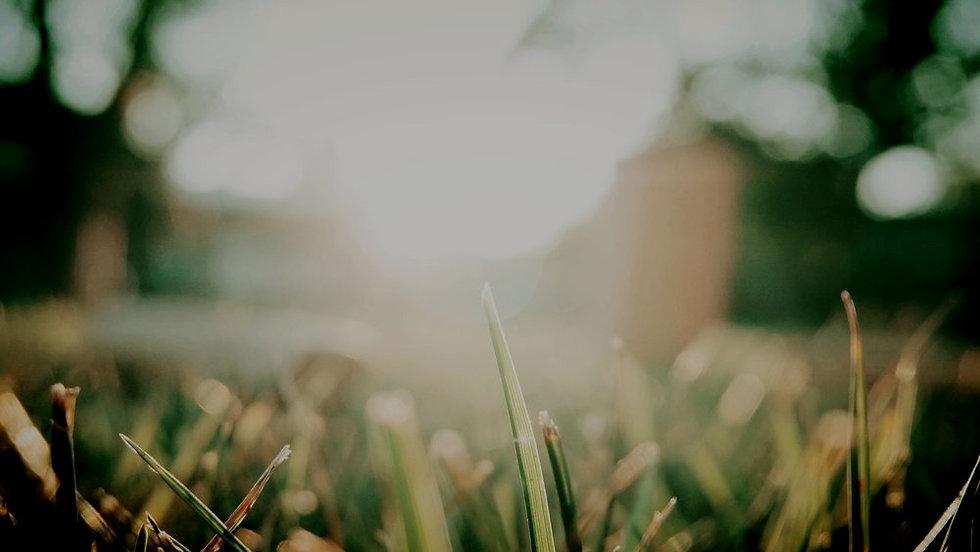 Solar power rays shining over grass.