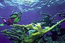Voyage de plongee sous-marine