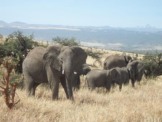lewa-wildlife-conservancy