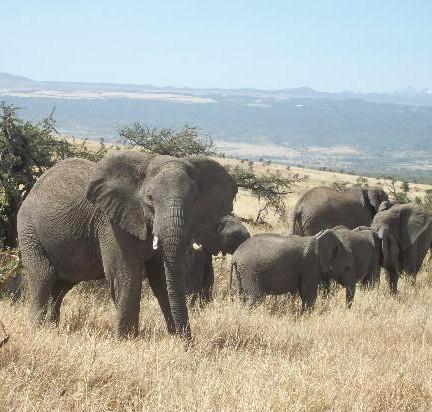 Bien préparer son safari en Afrique