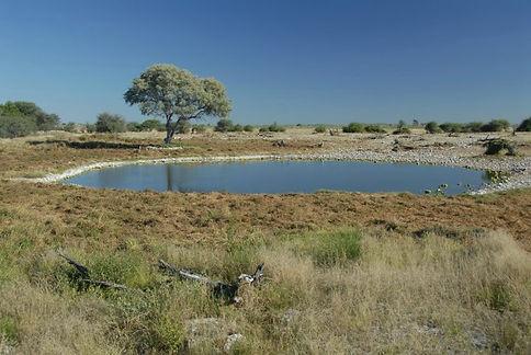 Etosha, Namibie