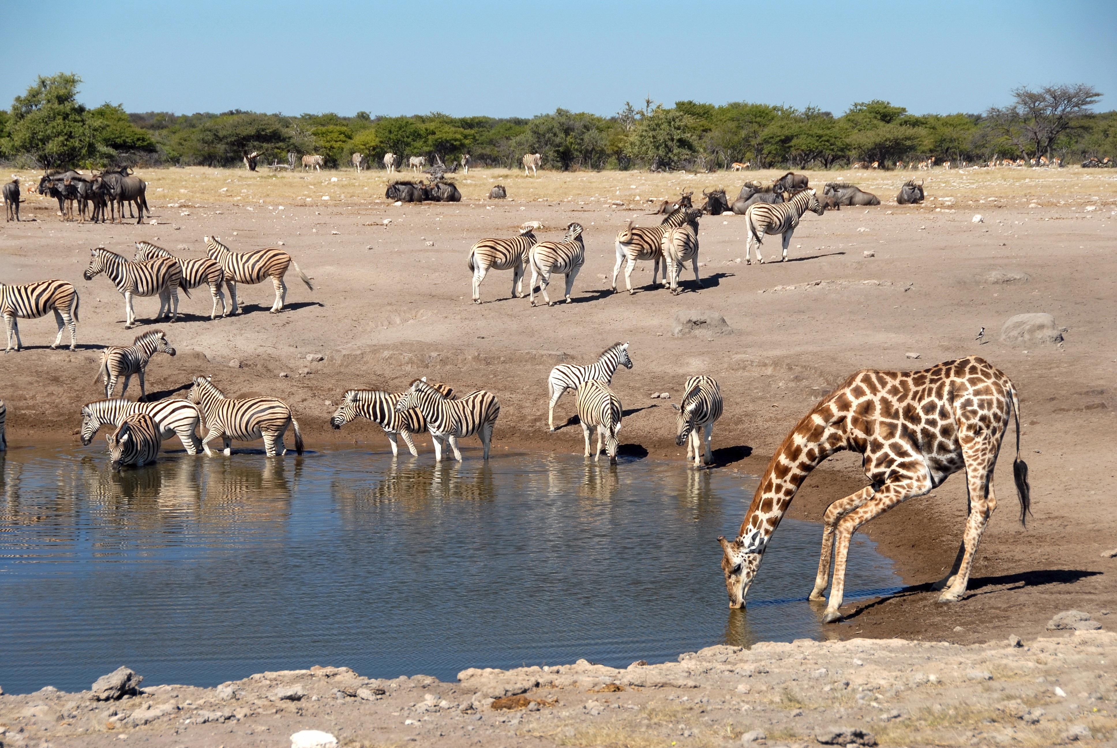 Couleurs australes en Namibie - 09.jpg