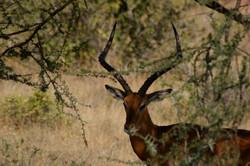 Safaris - photos en Afrique - 060.jpg