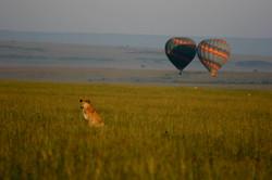 Safaris - photos en Afrique - 043.jpg