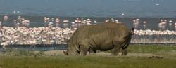 Safaris - photos en Afrique - 083_edited.jpg