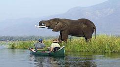 Delta Okavango, Botswana