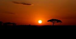 Le Safari en Tanzanie - 041-2.jpg