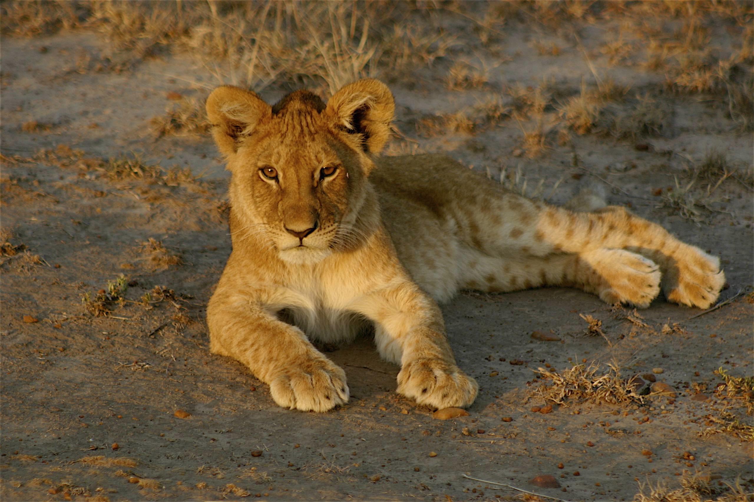Le Safari en Tanzanie - 037.jpg