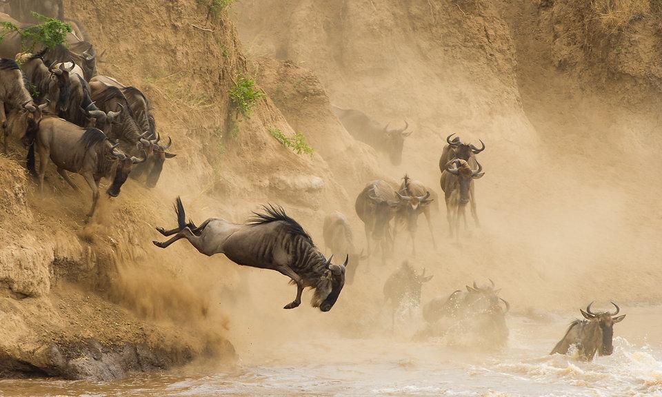 Migration, Mara
