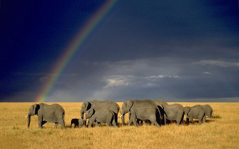 7024381-rainbow-elephant-herd.jpg