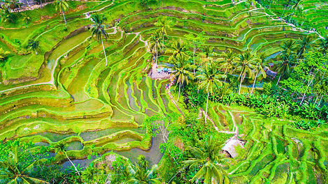 ubud-rice-culture-wide.jpg