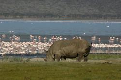 Safaris - photos en Afrique - 083.jpg