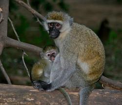 Safaris - photos en Afrique - 032.jpg